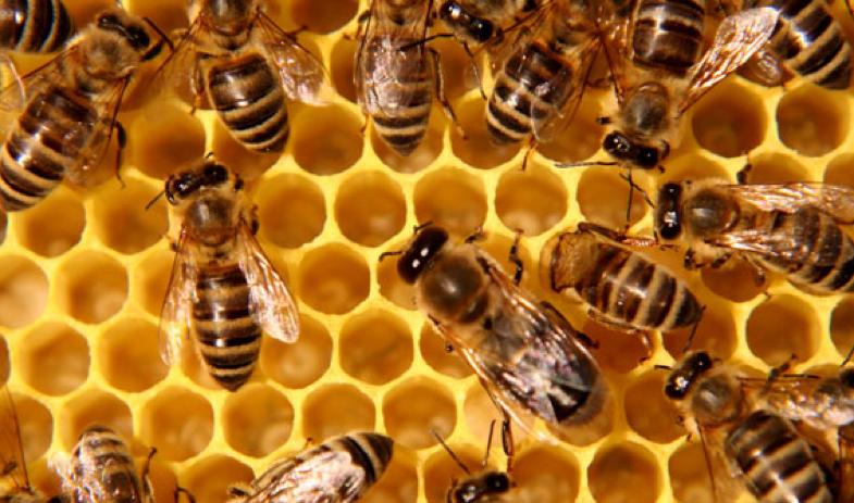 bees in a honecomb