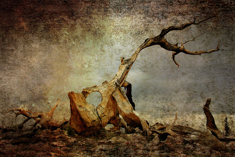 painting of a tree and wrecked landscape